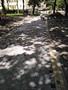 Укладка фем {тротуарной плитки} - Изображение #2, Объявление #1657340